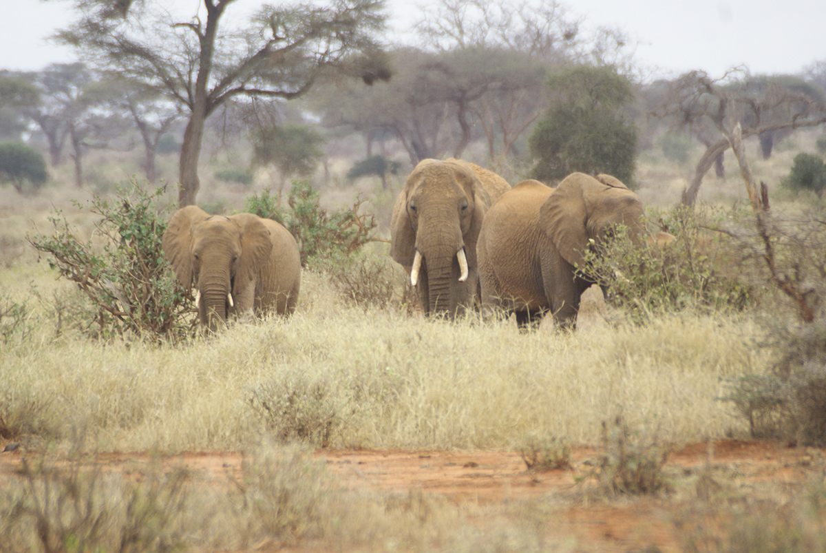 Elephants move as a family and they never forget where they have been.