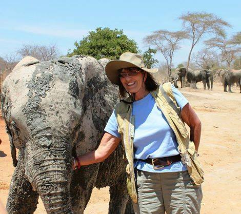 with_elephants_1