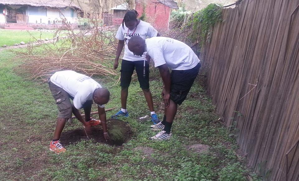 tree_planting_theplant